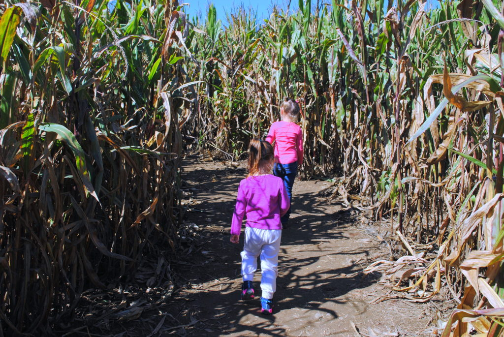 apple-orchard-corn-maze