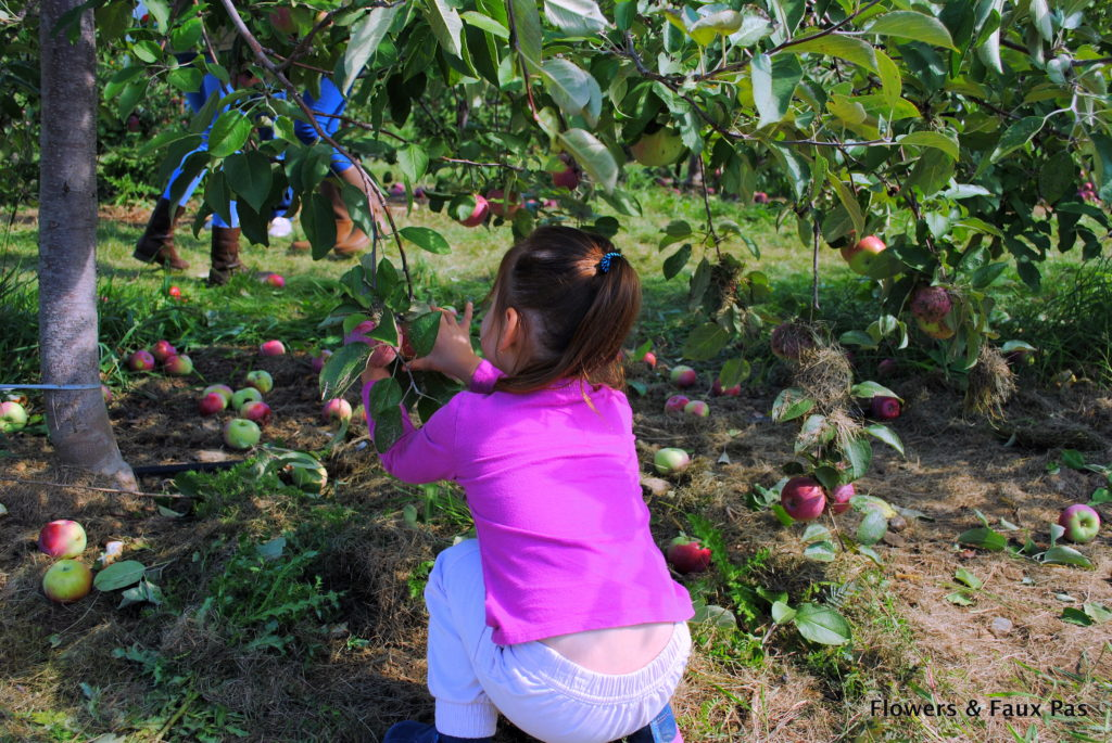 apple-picking-orchard